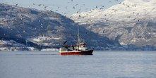 Sjart-Hordaland-_-helgeskodvin_nifes_101.jpg