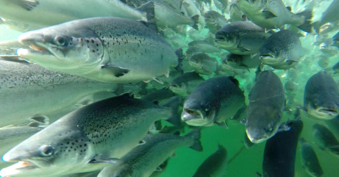 Rikelig med fisk dating USA