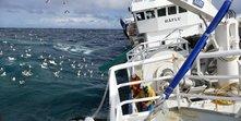C:\Users\a23389\OneDrive – Havforskningsinstituttet\Håflu Tom Williams.JPG