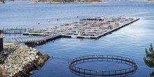 akvakultur.jpg
