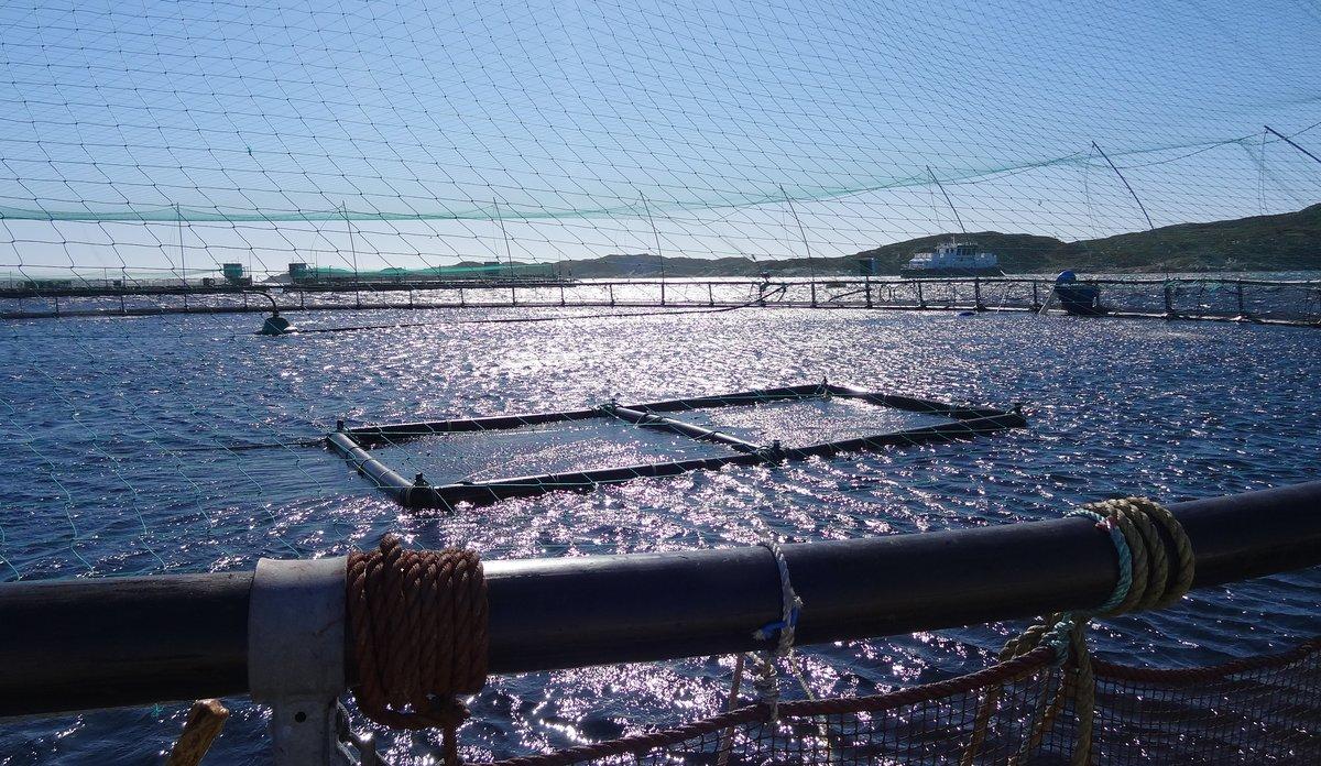 a57a263a Kronikk: – Å hindre lakselus er en forutsetning for at næringen skal vokse    Havforskningsinstituttet