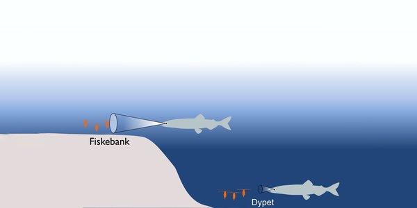 fiskebank.jpg