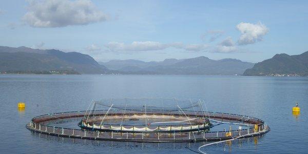 C:\Users\a23389\Documents\Prosjekt snorkelmerd\Commercial snorkel 90 m inside a 160 m cage.JPG