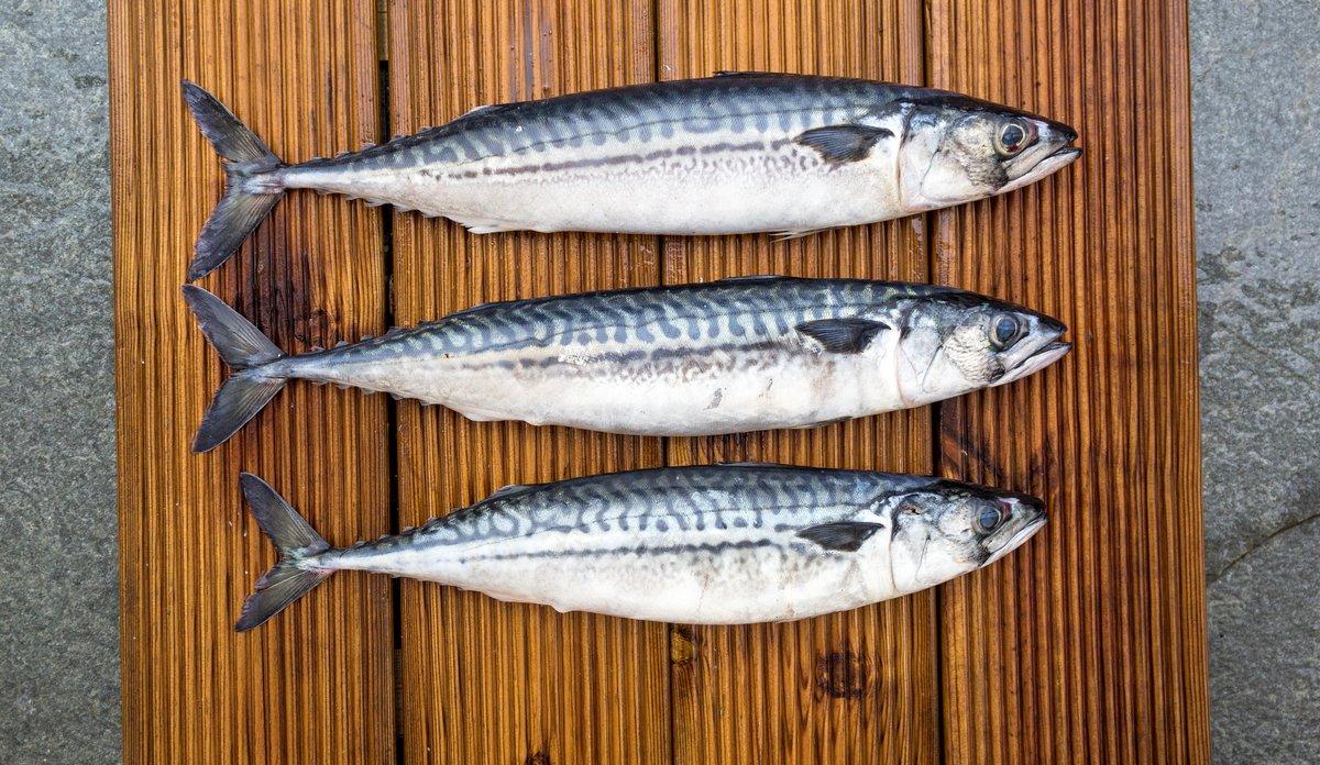 Fakta Om Miljogifter I Fet Fisk Havforskningsinstituttet